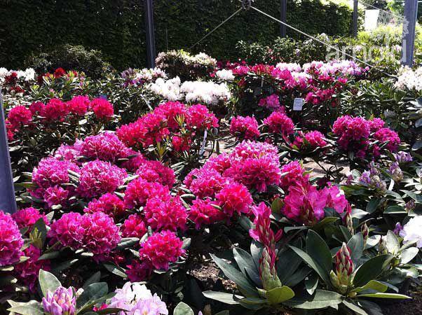 Gartengestaltung Pflege gewerblich 13