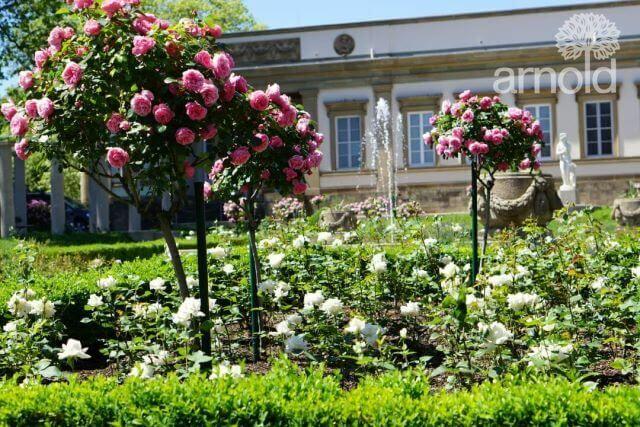 Gartengestaltung Pflege gewerblich