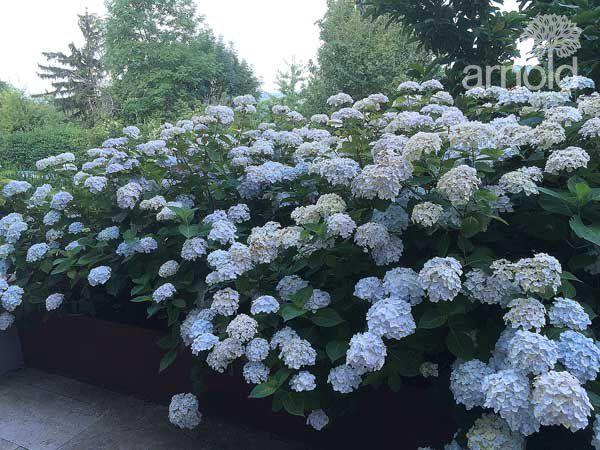 Gartengestaltung Pflege gewerblich 03